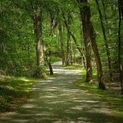 winding-trails-at-bur-mil-park-matt-taylor